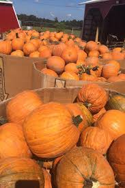 Pumpkin Patches In Oklahoma these are the best pumpkin patches in every southern state