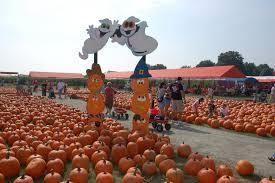 Pumpkin Picking Farm Long Island Ny by Enjoy The Great Pumpkin Farm In Long Island