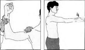 The shoulder Rheumatoid Arthritis Arthritis Research