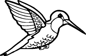 Collection Of Solutions Hummingbird Coloring Pages To Print For Your Job Summary