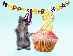Happy Birthday Cat Gif Animalgals
