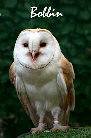 Facts About The Barn Owl. White And Brown Barn Owl Free Image Peakpx Sd Falconry Barn Owl Box Tips Encouraging Owls To Nest Habitat Diet Reproduction Reptile Park Centre Stock Photos Images Alamy Bird Of Prey Tyto Alba Video Footage Videoblocks Barn Owl Tyto A Heart Shaped Face Buff Back Wings Bisham Group Bird Of Prey Clipart Pencil In Color British Struggle Adapt Modern Life Birdguides Beautiful Owls Pulborough Brooks The