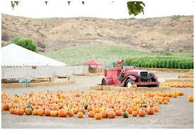 Pumpkin Patch Near Santa Clarita Ca by Ayla At The Lombardi Ranch Megan Hayes Photography