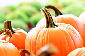 Chatfield Pumpkin Patch Hours by Looking For A Pumpkin Patch We Can Help Richards Seeley