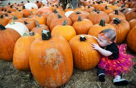 Irvine Ranch Railroad Pumpkin Patch by Here Are The Best Photos At Orange County Pumpkin Patches In 2016