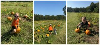 Pumpkin Patches In Arkansas by Our October In Arkansas More Matthews