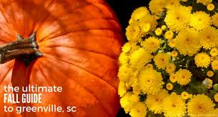 Pumpkin Patch Near Greenville Nc by The Ultimate Guide To Fall In Greenville Sc U2013 Kidding Around