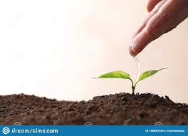 100 Seedling Truck Farmer Pouring Water On Young In Soil Against Light