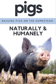 Best 25+ Berkshire Pigs Ideas On Pinterest | Pigs, Pig Farming And ... Which Pig Find Your Next Thing Modern Farmer Pigs Pigs And More Pigs Backyard Chickens Raising Feeder Concrete Or Pasture Farm Fresh For Life Figueroa Breeding Gguinto Bulacan Youtube For The First Time Page 2 Pastureraised Pork Grows In Popularity Missippi A Balancing Act Being A Mom Wife Backyard Hogswine Cambodian Case Study Inrgrated Fish Farming The Site How To House Fence Price Of Illinois Poisoned Creeks Yet Limited 223 Best Images On Pinterest Farms