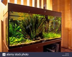 aquarium im wohnzimmer stockfotografie alamy