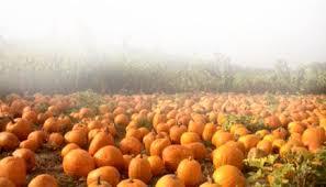 Santa Clarita Pumpkin Patch Festival by Halloween Harvest Festival Featuring Fright Fair