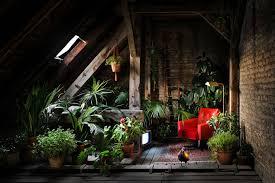 die richtigen pflanzen fürs badezimmer die wenig licht