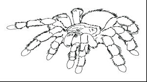 Black Coloring Pages 9 Spider Page Colouring Pictures