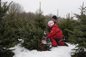 Griswold Christmas Tree Farm by Top Spots To Cut Your Own Christmas Tree In Connecticut Cbs