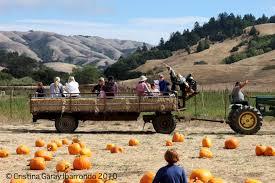 Pumpkin Patch Clanton Al by Pumpkin Patch La County Melicudadows