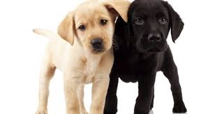 Low Shedding Dogs In India by 12 Most Low Maintenance Dog Breeds We Luv Puppies