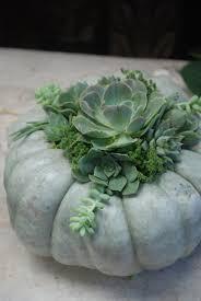 Pumpkin Moon Oak Park Il by Best 25 Green Pumpkin Ideas On Pinterest White Pumpkin Decor