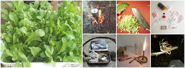 Homemade Fertilizer For Pumpkins by Using Banana Peels In The Garden For Fertilizer And Pests