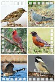 Easy Birdwatching With Kids | Ontario, Bird And Birdwatching Wild Birds Unlimited Common Backyard Bird Nest Idenfication Sounds Articles Old Farmers Almanac Whibreasted Nuthatch Sitta Carolinensis Birds Certhioidea Best 25 Birds Ideas On Pinterest Pretty Blue A Brown Headed Cowbird At Thicksons Woods Debunk 12 Myths About Feeding Cute Rbreasted Nuthatch Winter Of Wisconsin Species Infographic Poster By Diana Sudyka The Worlds Photos And Sviceberry Flickr Hive Mind Grow These Native Plants So Your Can Feast Audubon What I Find In My Ontario Canada Youtube
