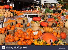 Pumpkin Patch In Long Island New York by Pumpkins The Hamptons Long Island New York State United States