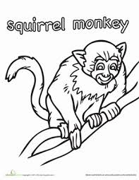 Color The Squirrel Monkey