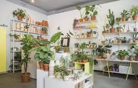zimmerpflanzen in berlin kaufen hier findet ihr euer