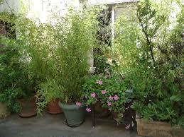 botanique maison bambou