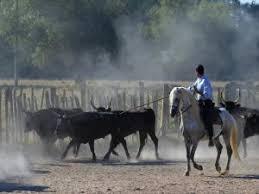 chambre d hote camargue manade découverte d une manade de taureaux et chevaux en camargue