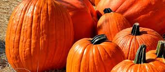 Best Pumpkin Farms In Maryland by Best Pumpkin Patches