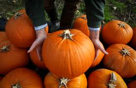 Pumpkin Patch Prince Frederick Md by Autumn Fun Here Are 16 Places To Find It Around Dc Wtop