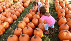 Pittsburgh Area Pumpkin Patches by Best Pumpkin Patches In The South Bay Cbs San Francisco
