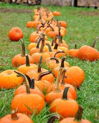 Puyallup Glass Pumpkin Patch by Phs Photo 2