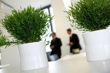 plante de bureau les plantes favorisent le bien être au bureau yang avec shui