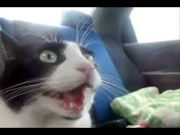 honda cat for cat in honda turbo vtec