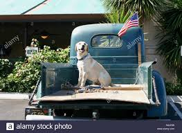 Dog Sitting At The Back Of A Pickup Truck Stock Photo: 5717050 - Alamy A Food Truck For Pets Is Coming To Boston Magazine Dogs Die Falling Off Pickup Trucks Trucking With A Dog What Drivers Should Know About Furry Pickups Pickup Truck Dog Rudy Photograph By Tara Cantore Blue Wall Art Bromi Design Pick Up Pal Cool Stuff Driving Behind The Steering Wheel Of Lorry Stock Debbis Front Porch Dawgz The Dangers In Beds 1800petmeds Cares Novel Four Bites Hc Thrifty Teachers