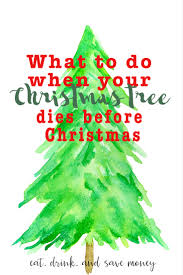 Publix Christmas Trees by What To Do When Your Christmas Tree Dies Before Christmas Eat