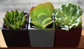 zimmerpflanzen und feng shui pflanzenfreunde