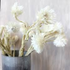 Use Dried Flowers For Country Weddings Or To Add Natural Beauty Your Home Decor Shop Our Growing Collection Of Preserved And Flower Stems