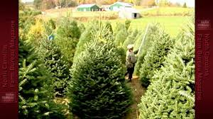 Fraser Fir Christmas Trees North Carolina by Christmas Trees In Nc Youtube
