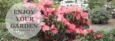 Christmas Tree Species Nz by Rhododendrons Online Rhododendron Nursery North Canterbury