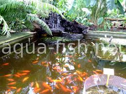 How To Build A Fish Pond Fish Pond From Tractor Or Car Tires 9 Steps With Pictures How To Build Outdoor Waterfalls Inexpensively Garden Ponds Roadkill Crossing Diy A Natural In Your Backyard Worldwide Cstruction Of Simmons Family 62007 Build Your Fish Pond Garden 6 And Waterfall Home Design Small Ideas At Univindcom Thats Look Wonderfull Landscapings Wonderful Koi Amaza Designs Peachy Ponds Exquisite