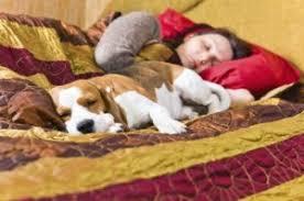 wer schläft noch mit im bett hund und katze sind in vielen