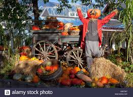 Pumpkin Man After The Harvest In Tivoli Gardens Copenhagen On A Sunny Late October Day Halloween Theme