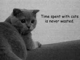 cat quotes cats quotes pictures images page 2