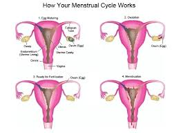 shedding uterine lining before period menstrual cycle and its abnormalities ask gynaecologist