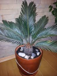 Best Plant For Bathroom Australia by Design Ideas Passion For Living