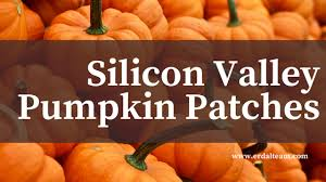 Pumpkin Patch San Jose 2015 by Silicon Valley Pumpkin Patches Erdal Team