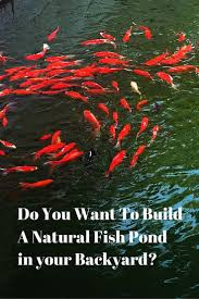 Best 25+ Fish Farming Ideas On Pinterest | Aquaponics, Tilapia ... Build Your Own Backyard Pond Fish Farm Minnow Bait Trap Breeding Bestfishforaquaponic1 Aquaponics Greenhouse Pinterest Sustainable Farming How To Dig A Raise Backyard Aquaponic Fish Hatchery Youtube Stock Rainbow Trout In Back Yard Commercial Feed Wikipedia In Home Worldwide To Insteading For Food Or Profit At My Tank Small Scale Based Farms Aquaculture Equipment Landbased Project Ras Indoor