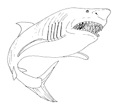 Great White Shark Coloring Page Pages Printable