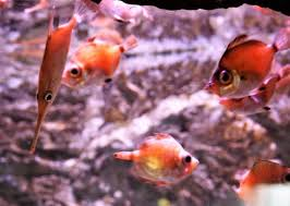 aquarium picture of aquarium la rochelle la rochelle tripadvisor